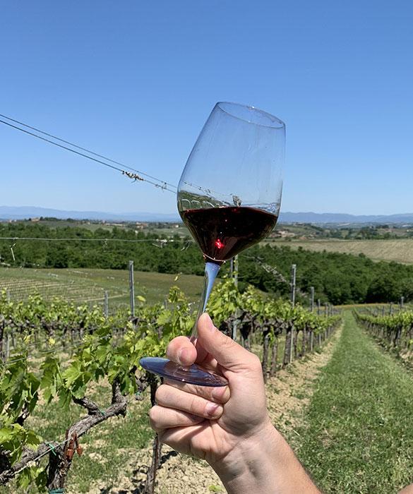 calica vino rosso in vigna