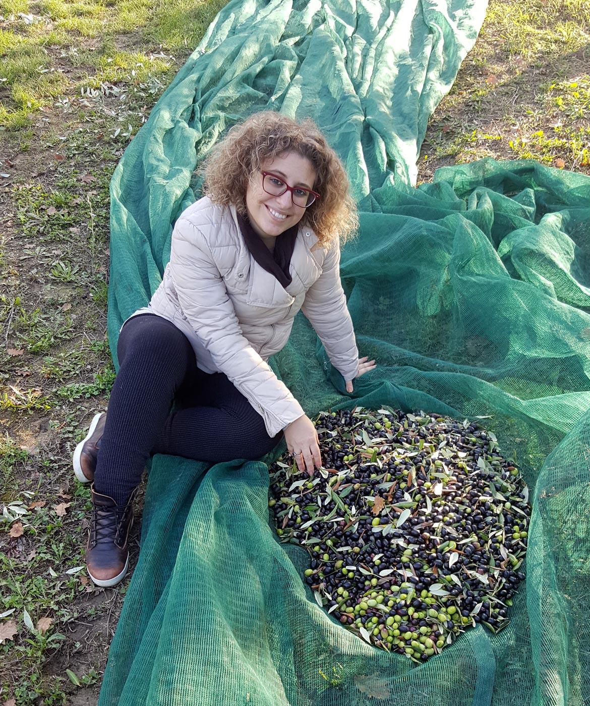 raccolta olive, rete olive