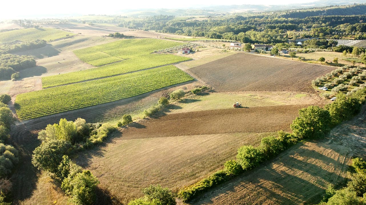 4 Vitigni internazionali in Toscana